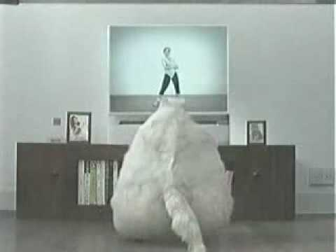 fat cat dancing.mp4 - YouTube