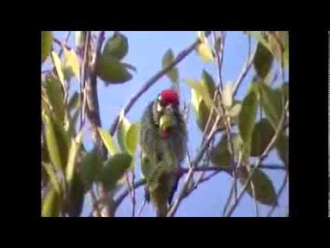 Birds of Doi Inthanon National Park Thailand part 2