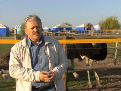 Агро-Союз: опыт промышленного страусоводства в Украине