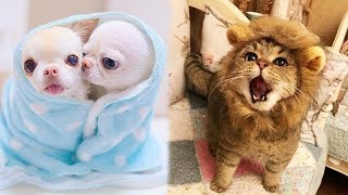 /cute baby animals videos compilation cute moment of the animals soo cute 89