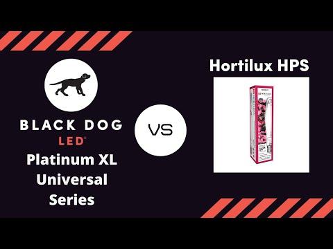 First 1000 watt HID vs. LED Grow Light Timelapse | Black Dog LED vs. Hortilux HPS Flowering MMJ