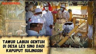 Tawur Labuh Gentuh di Desa Les Sing Dadi Kapuput Sulinggih