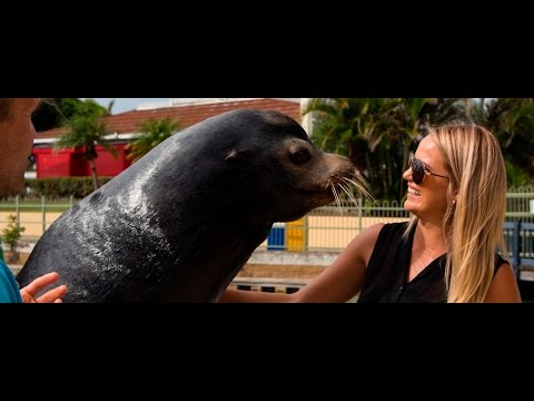 Animal Encounters on the Gold Coast