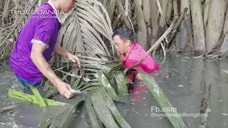Anh Em Ra Rạch Mò Cá Nước Cạn l Catching Fish With Bare Hand