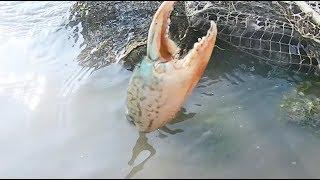 退潮后赶海各种海鲜大螃蟹无处可藏遍地都是抓的太开心了