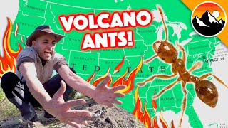 Volcano Ants ARE HERE! - 10 Things You Definitely Need to Know!