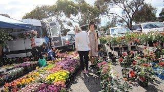 Cuộc sống hàng ngày ở Úc | Cả nhà đi chợ trời gặp người quen vui quá
