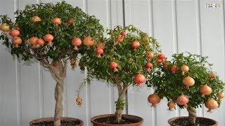 Top 8 Best Fruits To Grow In Pots | in Containers