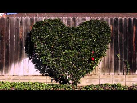 KeVita - Love is Everywhere