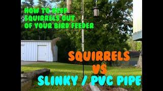 Squirrels vs PVC pipe / Slinky Combo #IAmHawkesVids