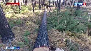 Прокуратура Омска заинтересовалась вырубкой леса в Чернолучье