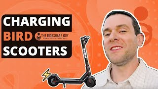 What It's Like To Be a Bird Charger - Charging Electric Scooters Review