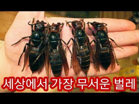 세상에서 가장 무서운 벌레 TOP5