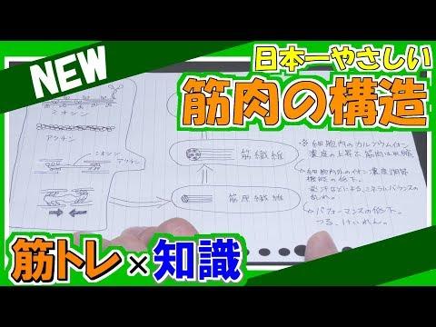 日本一やさしい筋肉の構造【筋肉・アクチン・ミオシン・筋原線維】