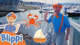 Blippi Visits The Marine Life Centre | Blippi Learns About Sea Animals | Educational Videos For Kids