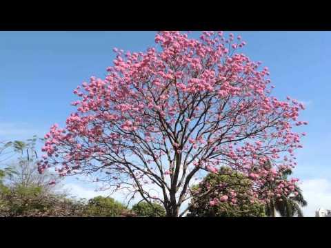 Baixar Sons da natureza, Canto de pássaros, 54 minutos, Relaxamento,