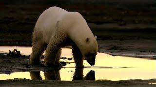 Thế Giới Động Vật | Thiên nhiên hoang dã nước Nga - Bắc Cực (Phần 2)