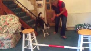 Sophie: indoor agility and a search.