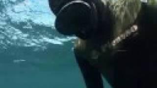 ホオジロザメ27