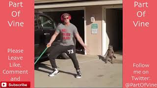 Funny Cats 2015   Vine Compilation   BEST VINES ✔️   YouTube