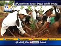 Haritha Haram: Over 1 lakh saplings to be planted at Gajwel alone