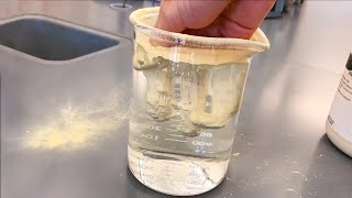 Friendly Seal Wants To Be Pet