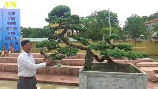 ĐẶT TÊN CÂY HAY NHẤT HOẰNG HÓA THANH HÓA ANH CHINH