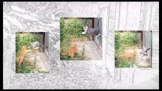 in the jingle jungle morning kittens play the circle game 子猫白書