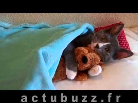 petit chat trop mignon qui s 39 tire cats video. Black Bedroom Furniture Sets. Home Design Ideas