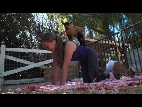 اليوغا مع الماعز آخر الصيحات في الولايات المتحدة