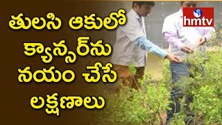 NIT Warangal finds cancer cure in Tulsi leaves..