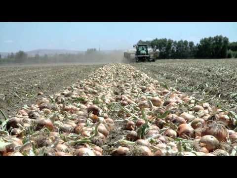 L&L Farms - Washington Onion Farmers