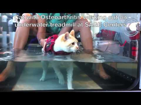 Cat using Underwater Treadmill - Physical Therapy for Animals www.SageCenters.com