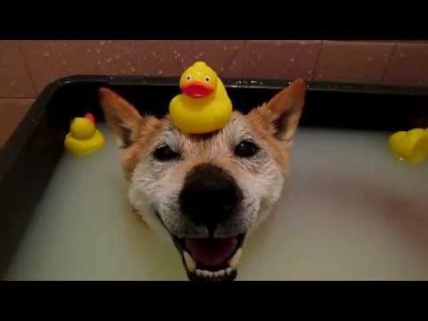 如果你再把小黄鸭放在我头上,我就...