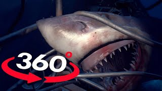 360 Video VR SHARK 360 VR 4K - OMG Will you survive?