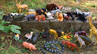 100 Animal Toys Playing in The Park - Learn Animals Names with Animals Toys Collection
