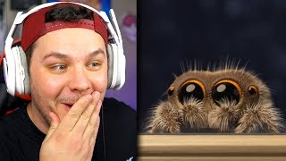 Lucas The Spider *ADORABLE* - Reaction