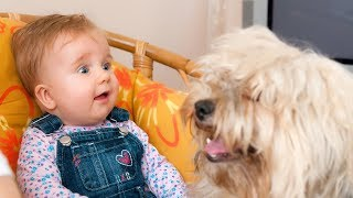 Funny Babies Talking to Dogs Compilation
