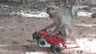 How To Make Fun With Monkeys - Everyday Monkey Funny Videos