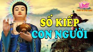 Những Câu Chuyện Phật Giáo Thấu Tận Tâm Can Về Nhân Quả Và Số Kiếp Con Người - Nghe Để Đời An Lạc