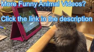 Funniest Confused Pets Compilation Funny Pet Videos 2019