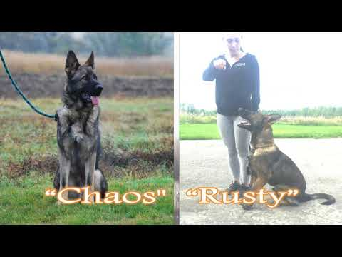 Best Trained Personal Protection Dogs