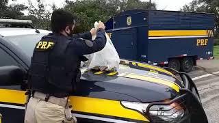 Mulher é presa com mais de 70 mil reais sem procedência em Pelotas