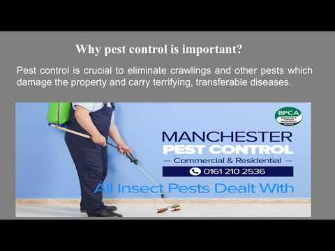 Drag the Pests Out of Your Home- Hire Pest Control Professionals