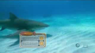 Shark Week8