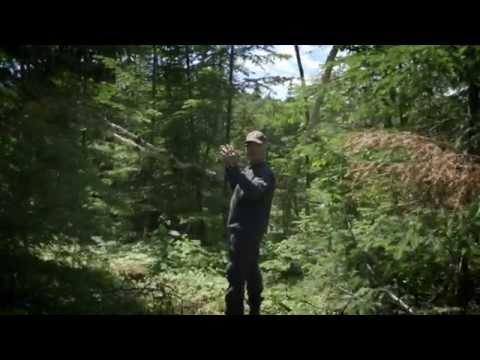 Vidéo : Les effets positifs de la récolte forestière