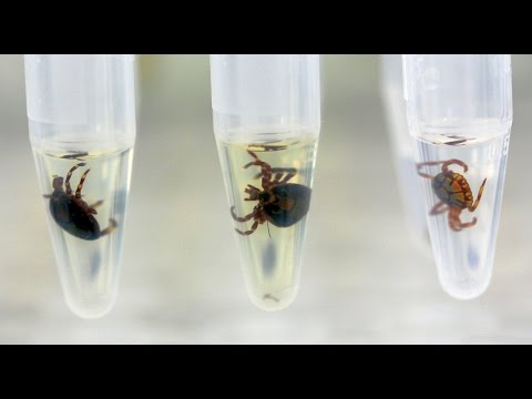 Identification of ticks by MALDI-TOF MS.