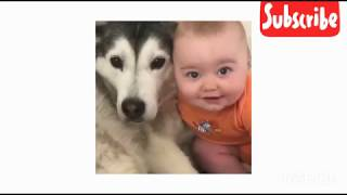 FUNNY DOGS, prepare yourself to CRY WITH LAUGHTER!!! - Best DOG compilation VIDEOS
