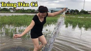 Đi giăng lưới cá trên đồng hoang sau cơn mưa to trúng toàn cá khủng | hot girl catches fish