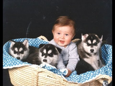 Husky Siberian And Babies Playing Videos Compilation 2016
